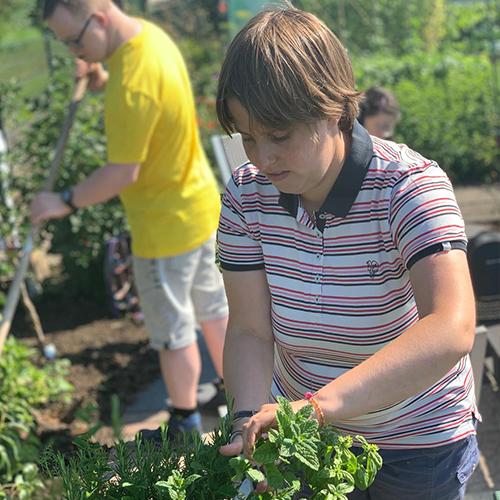 Activiteitencentrum zegveld activiteit tuinieren